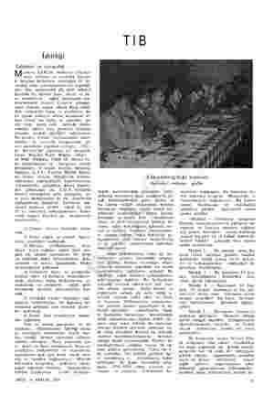 İşbirliği Tababet ve eczacılık Her memleketin dış ışleri vekâleti kanal le bu komite kara, deniz ve ha- va ordularının saglık