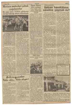 27 Nisan 1938 Merinos melezleri çabuk çoğalıyorlor Bir sene sonra bunların mikdarının yüz bini bulacağı tahmin edilmektedir y