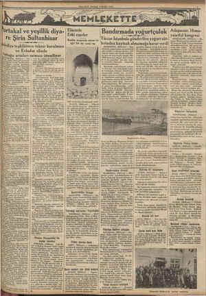 İki ANHISAR, (Milliyet) — Sul Kk kiş şAydın demiroylu üzerinde örme rengini kaybetmiyen iş Saçları arasına gömülmüş, e mahiye