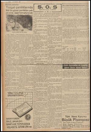 6—VAKIT 27 MAYIS 1939 Memleket mektupları : Yozgat çamlıklarında Vali bu güzel çamlıkları pek | ya çınna ışıga kavuşturacak